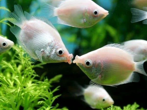 Милые рыбки
