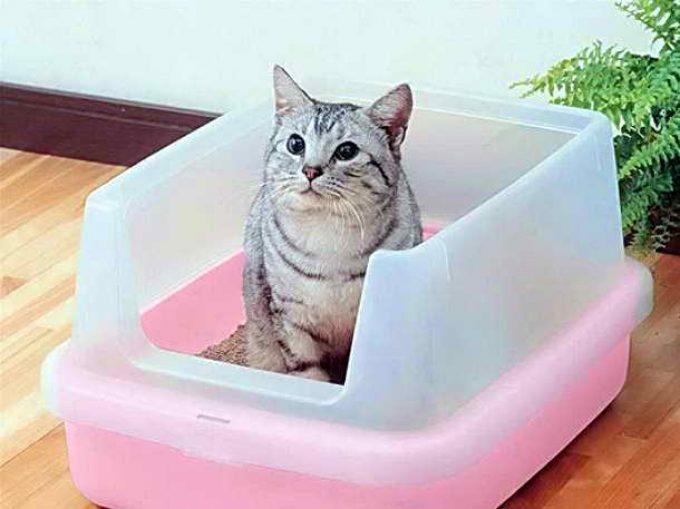 котенок сходил в лоток