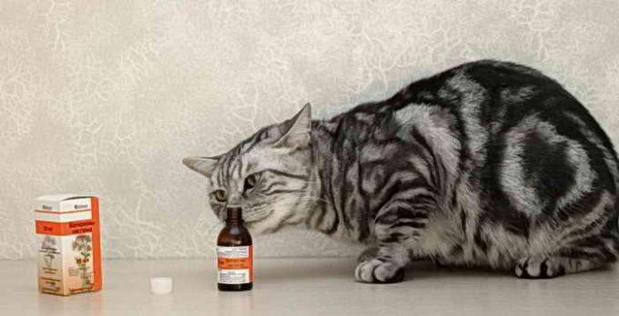 почему кошки балдеют от валерьянки