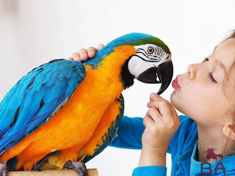 Попугай разговаривает
