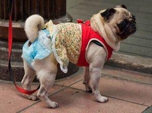 купить памперсы для собак
