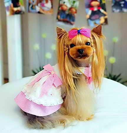 Выбираем стрижку йорку: 50 фото для мальчиков и девочек, превращение собаки в стилягу