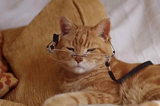 как помочь коту дожить до старости