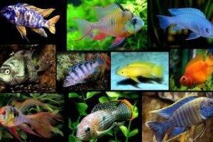 Совместимость различных видов домашних аквариумных питомцев