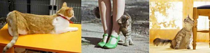 поведение кошки во время течки