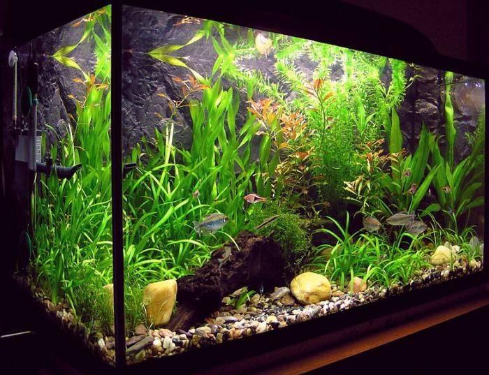Растительный аквариум