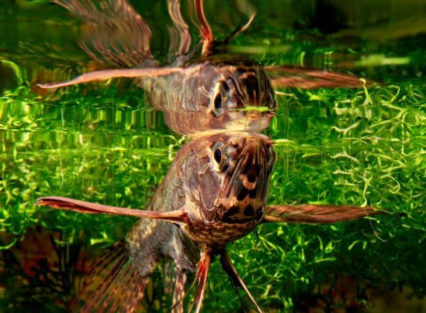 Красивая рыбка бабочка