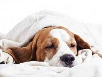 энтеропатия у собак