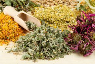 Антипаразитарный травяной сбор – смертельный удар по паразитам