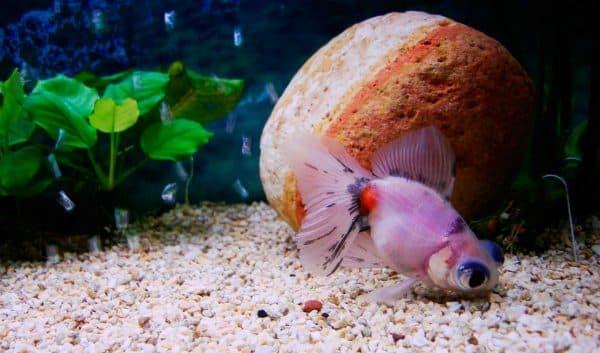 Телескопы дружелюбные рыбки