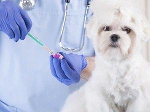 прививка от бешенства собаке когда делать