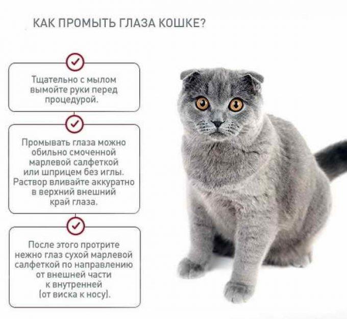 правила промывания глаз кошке