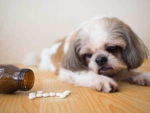 лечение пиометры у собак антибиотиками