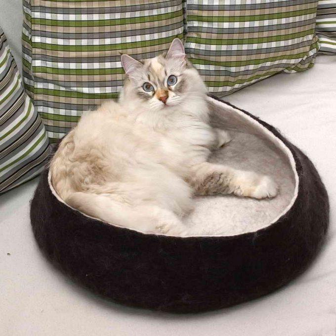 нужно ли спальное место для кошки