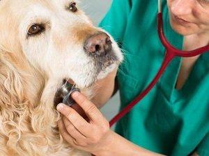 гипотиреоз у собак диагностика