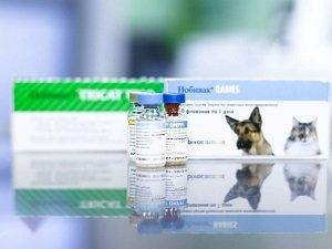 осложнения от прививки от бешенства у собак