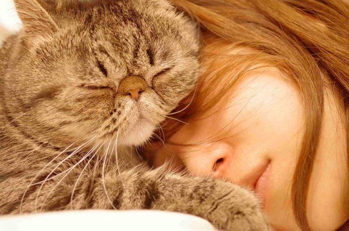 почему кошки ложатся на хозяина