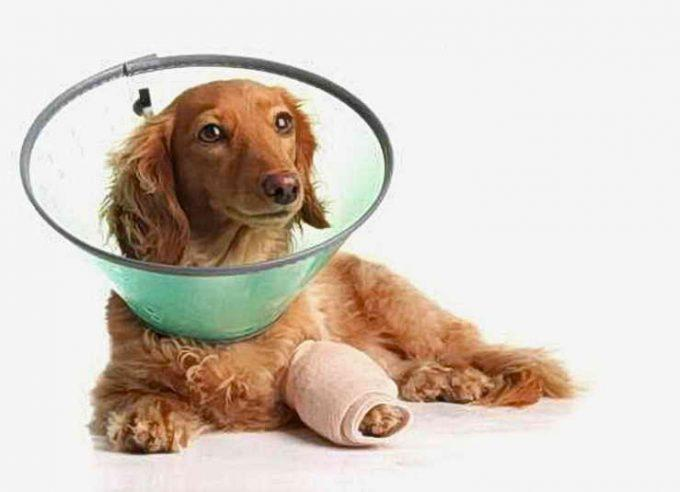 собаке нельзя зализывать ранку на лапе