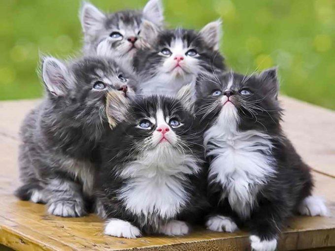 кошачий помет нужно прививать