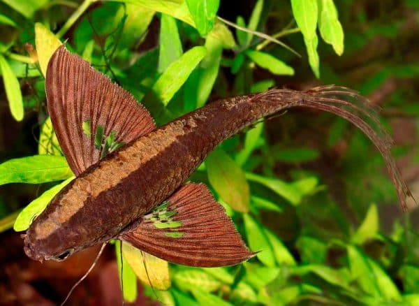Прекрасная рыбка бабочка
