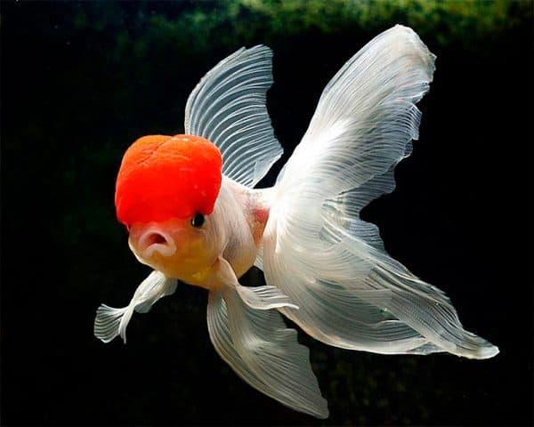 Как размножаются рыбки