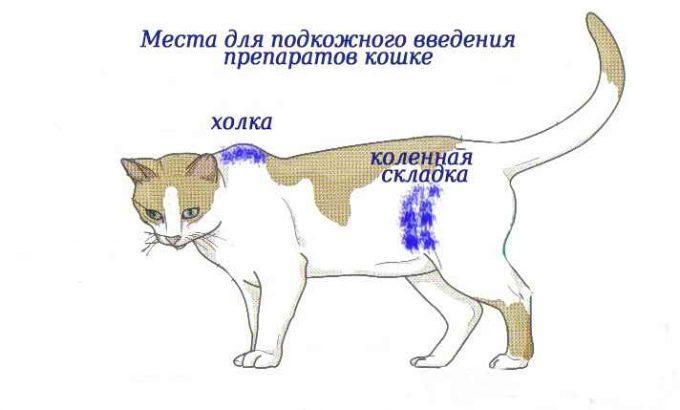 где холка у кошки