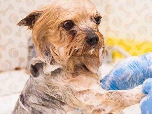 шампунь для собак от блох и клещей