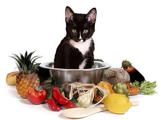 натуральные витамины для кошек