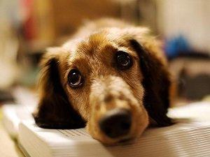 у собаки озноб дрожит