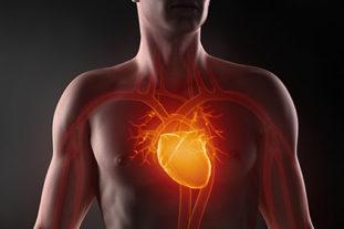Наиболее опасно для жизни поражение трипаносомами сердечной мышцы