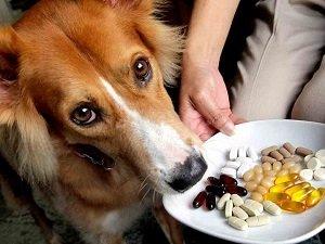 какие антибиотики можно давать собакам