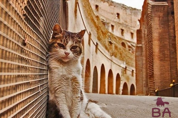 Римский кот