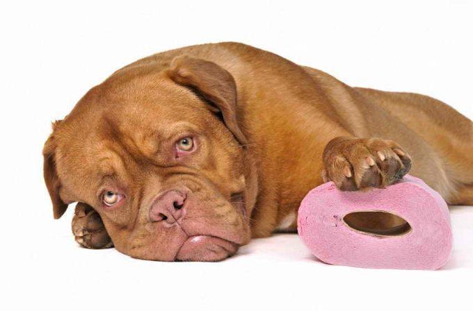 как сделать клизму собаке