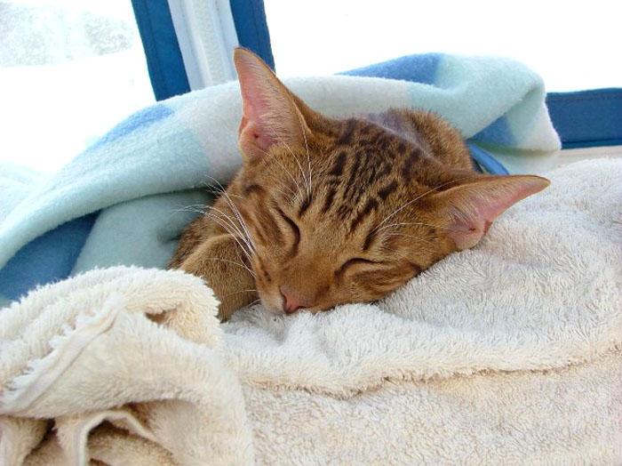 Кошка в кровати