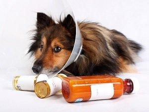понос у собаки после антибиотиков
