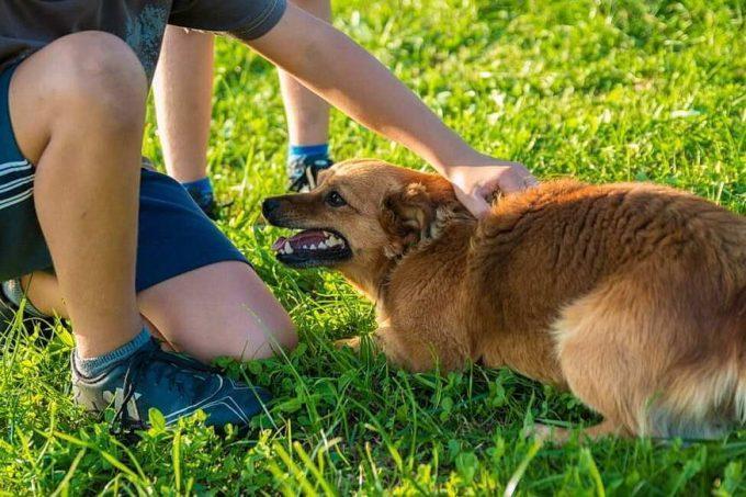 взаимодействие хозяина и собаки в период обучения команде Лежать