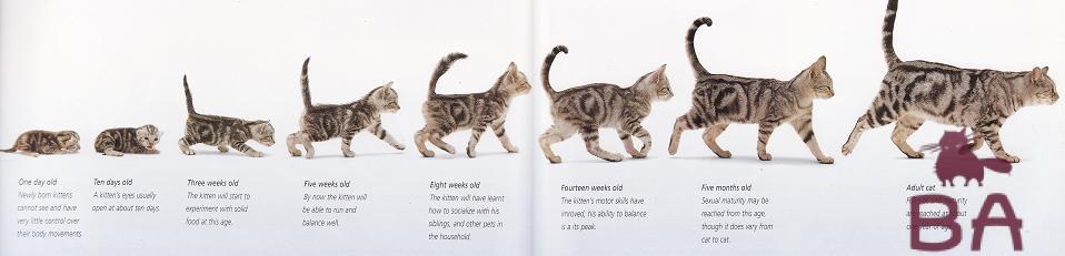 того, сегодняшний развитие котят по месяцам фото третий снимки