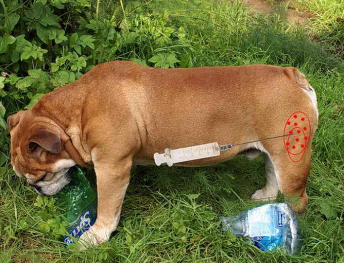 куда делают внутримышечный укол собаке