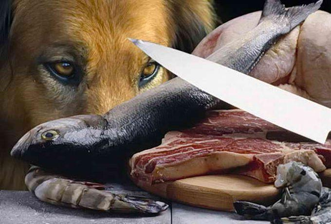 сбалансированное питание собаки