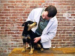 как давать глистогонное собаке