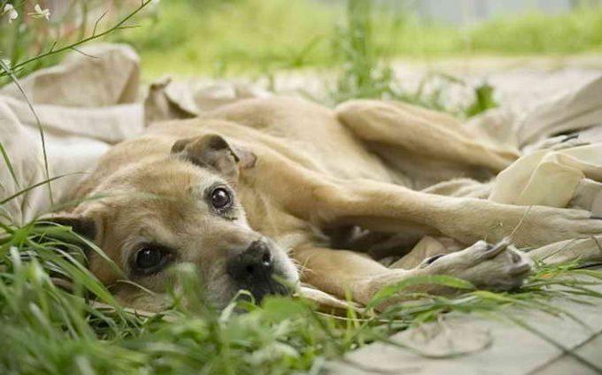 причины судорог у собаки