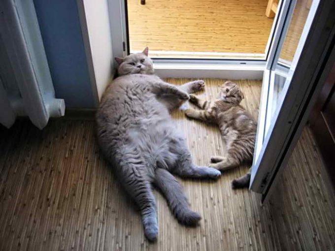 кошки на сквозняке