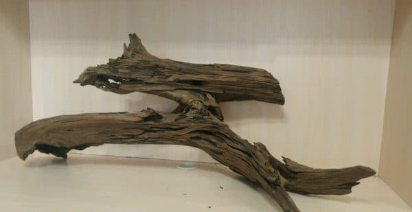 Мангровая коряга фото