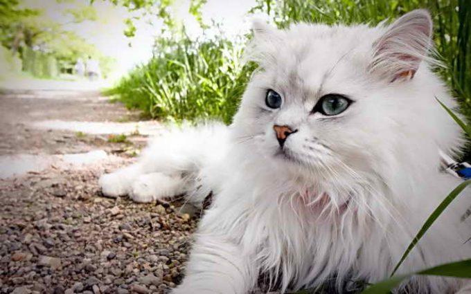 у кошки здоровая шерсть