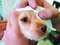 промывать глаза собаке