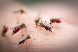 Также в целях профилактики гельминтозов нужно бороться с переносчиками яиц, цист глистов – мухами, комарами, москитами, предупреждать их контакт с пищей, предметами, кожей