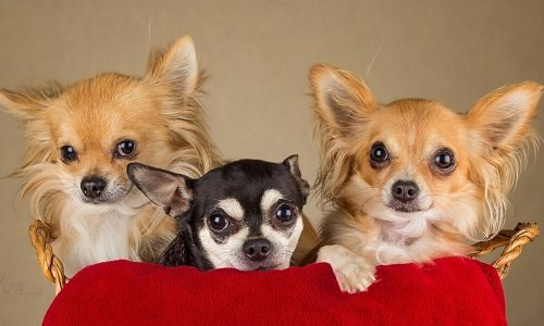 порода маленьких собак с фотографиями и названиями