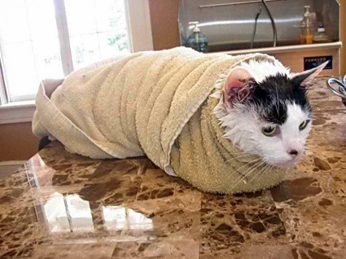 кот сушится