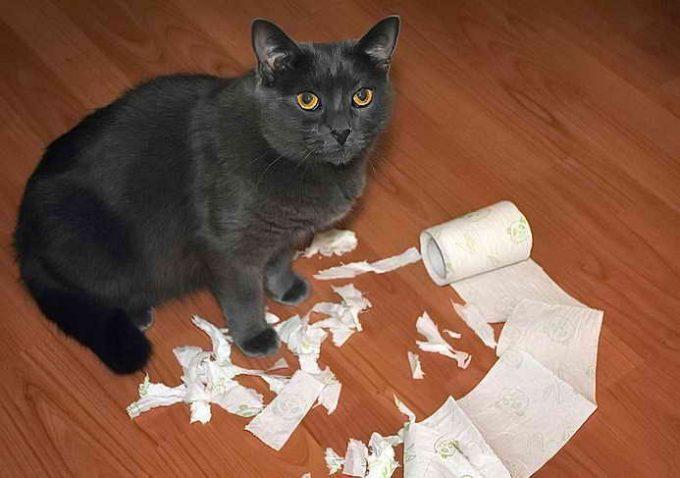 как наказать кота за то, что гадит