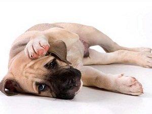 признаки отравления у собак симптомы